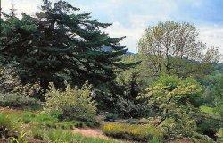 Botanická zahrada Schellerhau