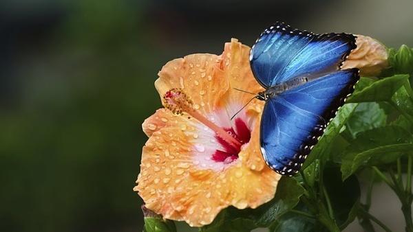 Motýlí dům Žírovice