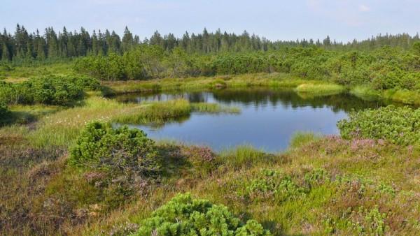 Přírodní rezervace Velký močál