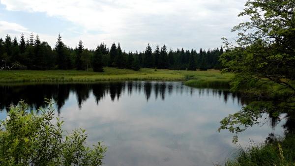 Naturreservart Schwarzer Teich