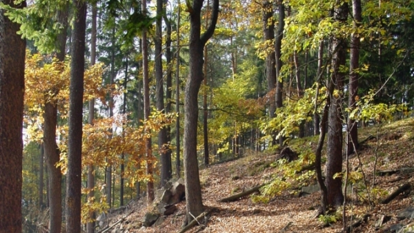 Národní přírodní památka Doupňák