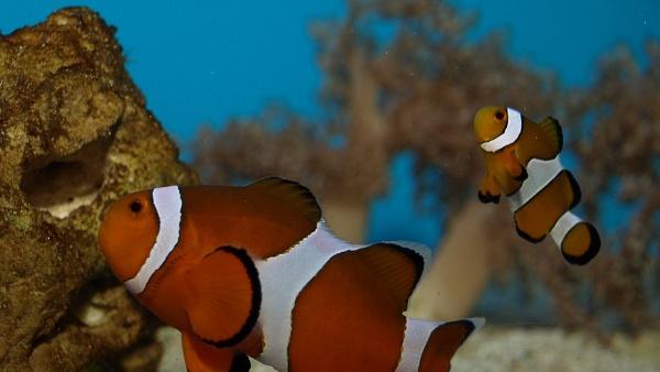Rajské ostrovy - oddělená expozice děčínské zoo