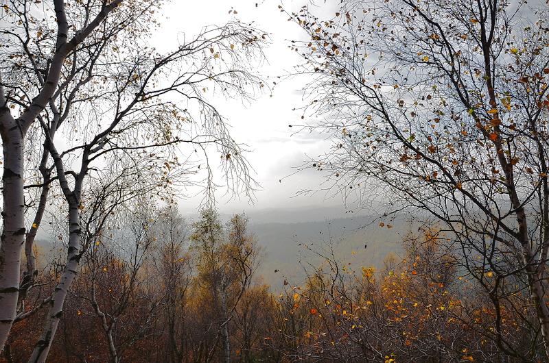 Výhledu brání menší břízky (a někdy i mlha) | Krušnohorci