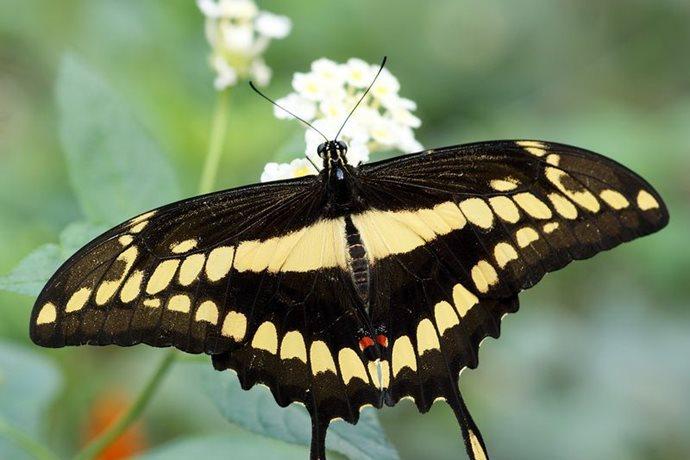 Motýlí dům Žírovice | motylidum.cz
