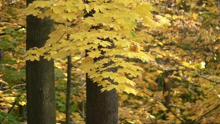 Řetenický lesopark  |  Krušnohorci