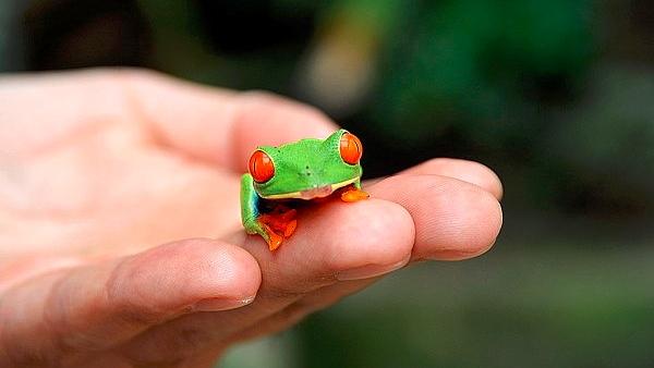 Tierpark Aue Zoo der Minis