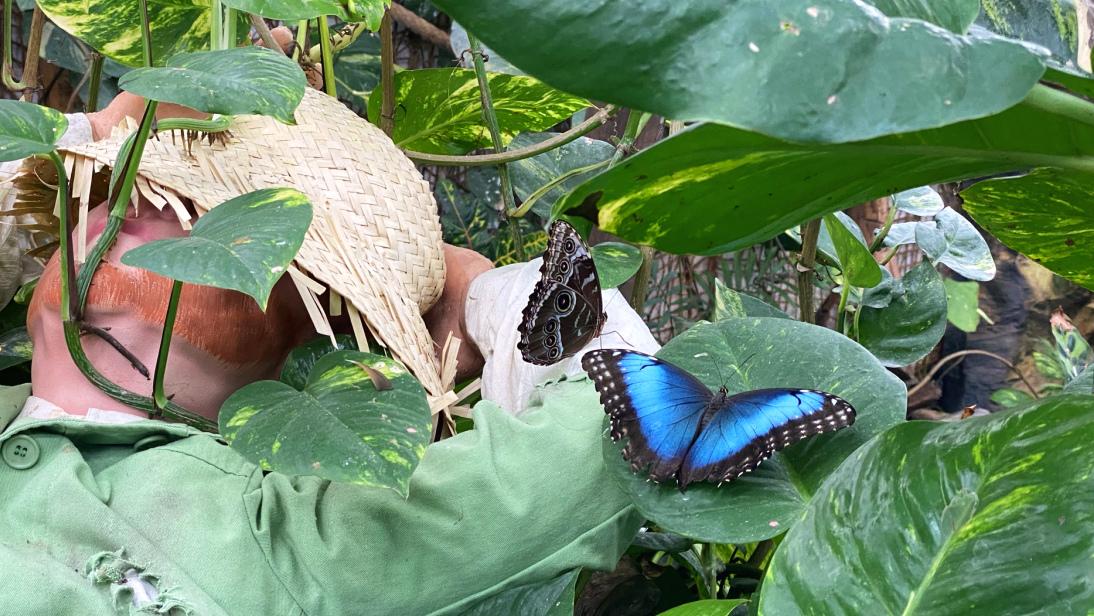 Schmetterlingshaus Diana