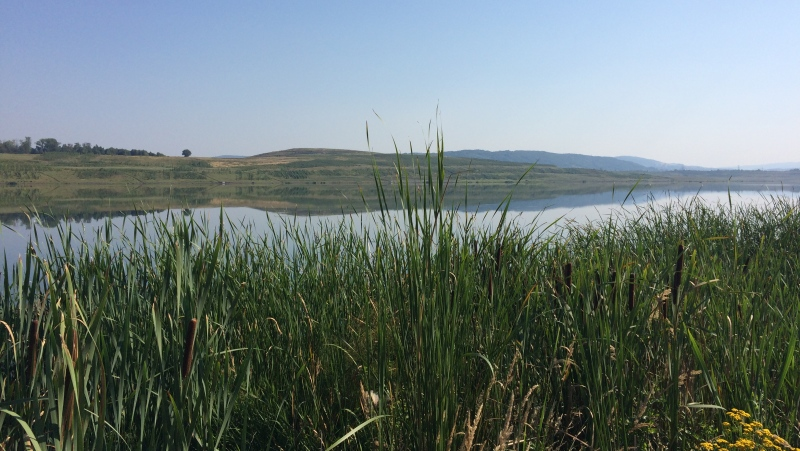Jezero Milada, flóra | Krušnohorci
