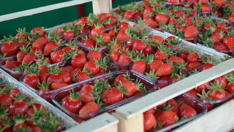Samosběr a prodej jahod