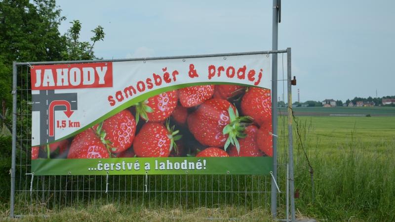 Reklamní poutače samosběr jahod | Krušnohorci