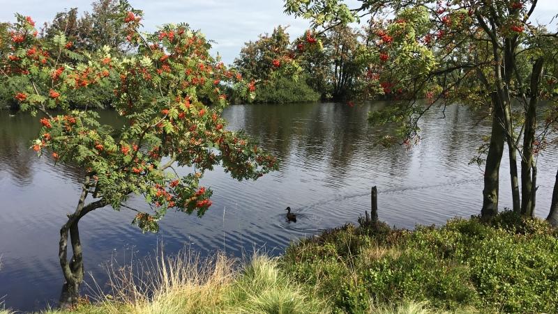 Rašelinový Dlouhý rybník na Cínovci