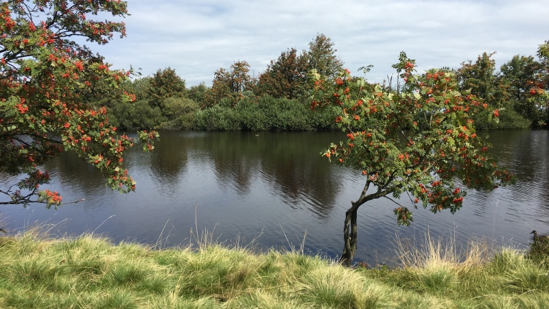 Na břehu, Dlouhý rybník | Krušnohorci