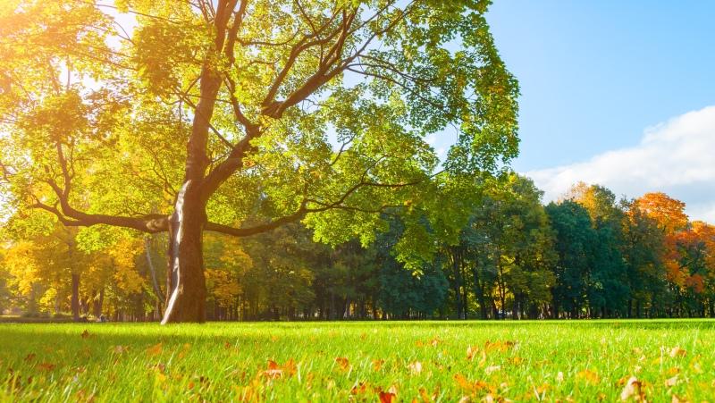 Den stromů 20.října  |  Krušnohorci