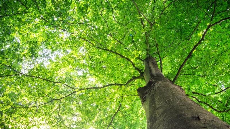 Den stromů | Krušnohorci