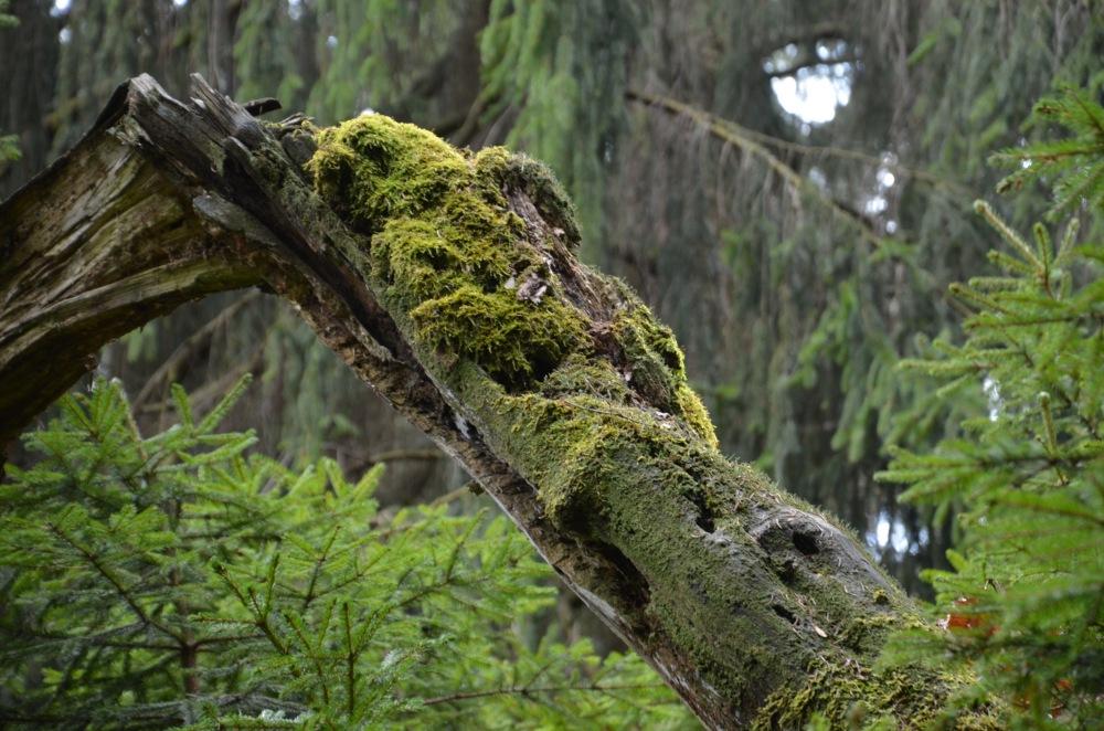 Příroda Prunéřovského údolí