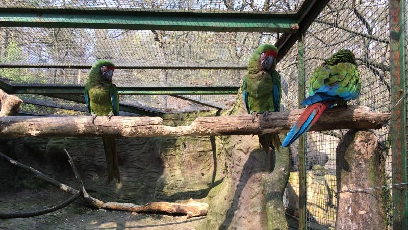 Zoo v Děčíně | Krušnohorci