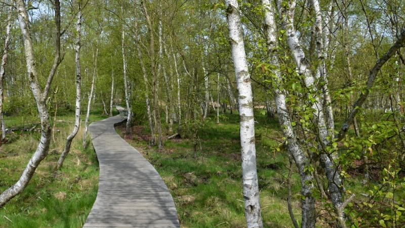 Přírodní rezervace SOOS | Krušnohorci
