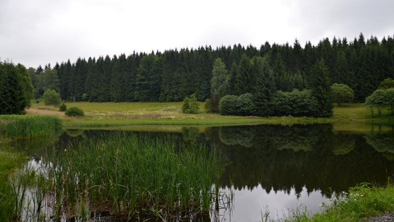 Lesní jezírko Schwemmteich | Krušnohorci