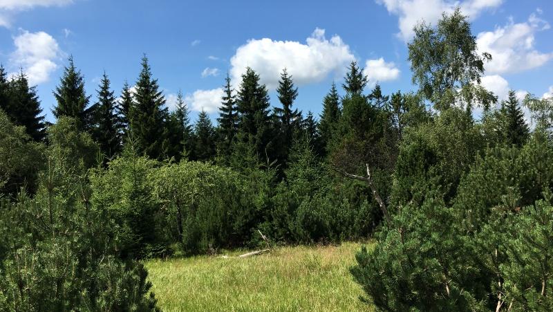Novodomské rašeliniště