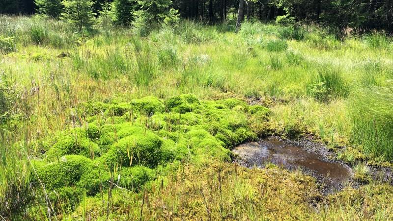Novodomské rašeliniště   Krušnohorci