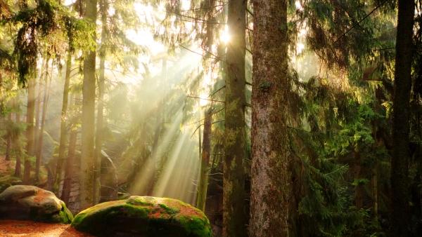 Letní foto a videosoutěž s Destinační agenturou Krušné hory