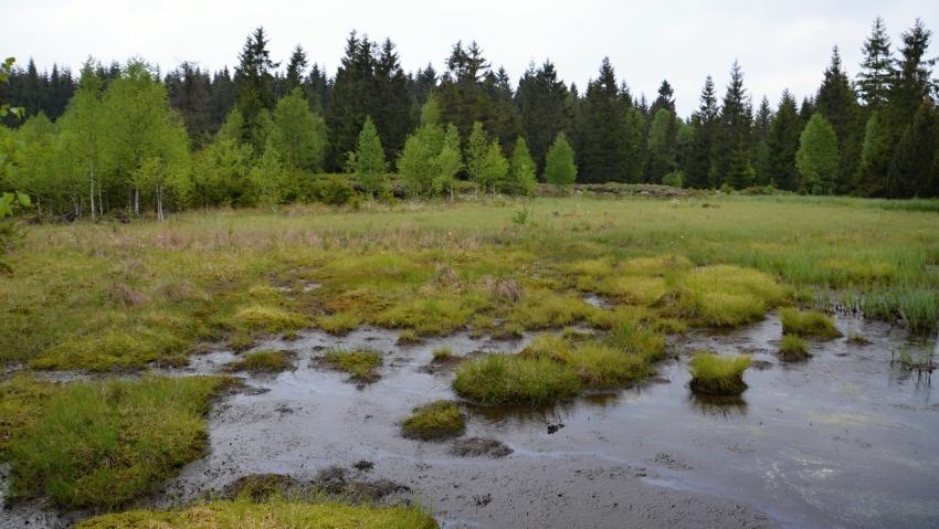 Rašeliniště Kühnhaide | Krušnohorci
