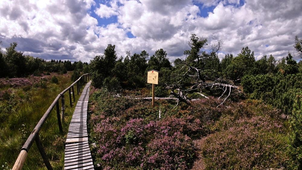 Georgenfelder Hochmoor  |  Krušnohorci