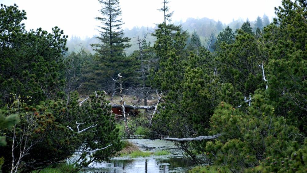 Georgenfeldské horské rašeliniště | ---