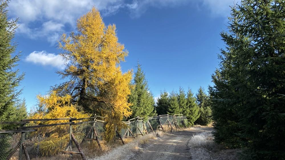 Podzimní procházka na Pramenáč vám zvedne náladu