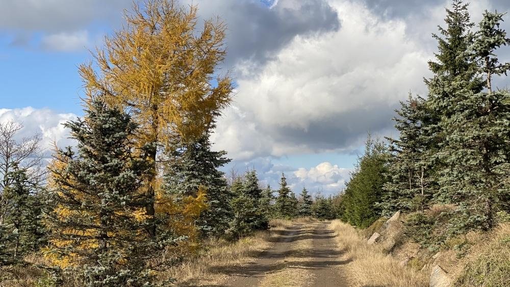 Podzimní procházka na Pramenáč | Krušnohorci