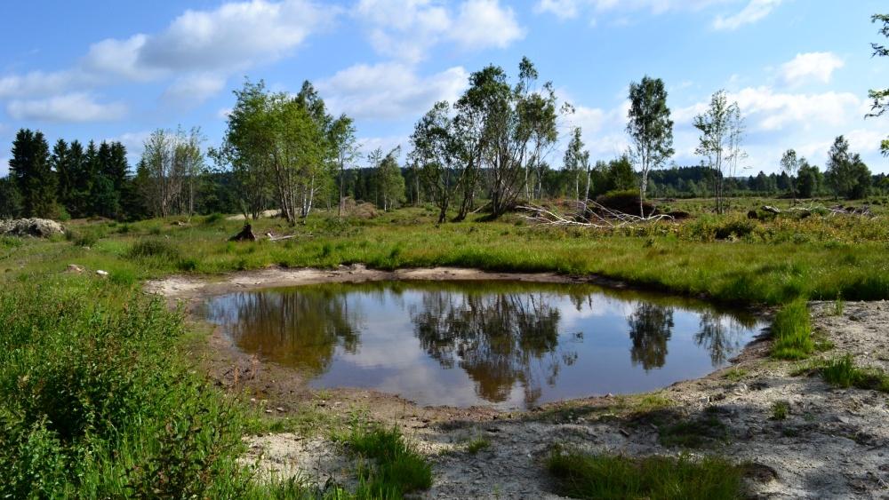 Obnova perninského rašeliniště  |  Vladimír Melichar