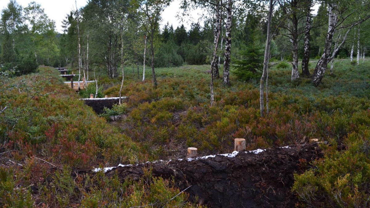 Revitalizace Perninského rašeliniště | Vladimír Melichar