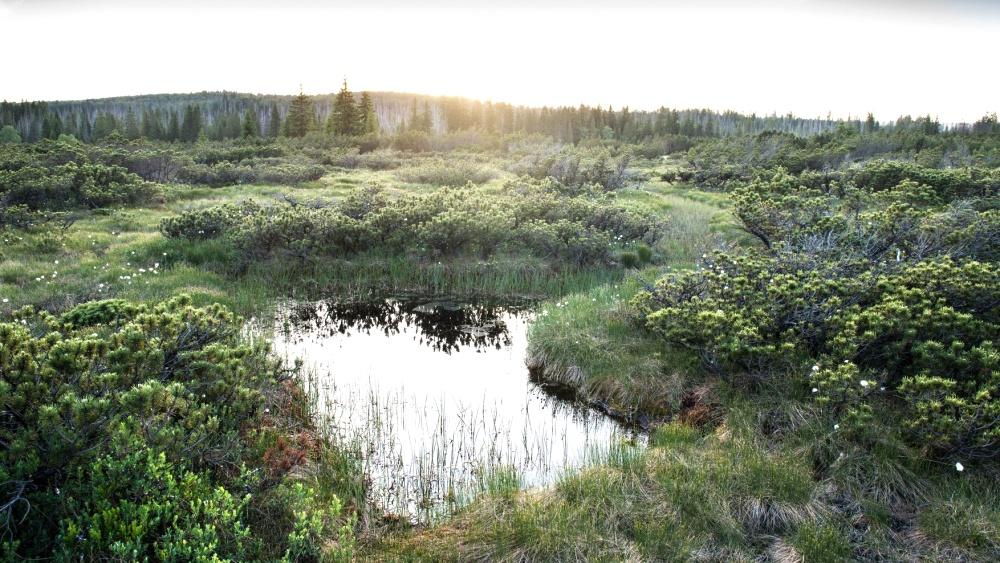 Rudenská luční prameniště  |  Karlovarský kraj, tisková zpráva