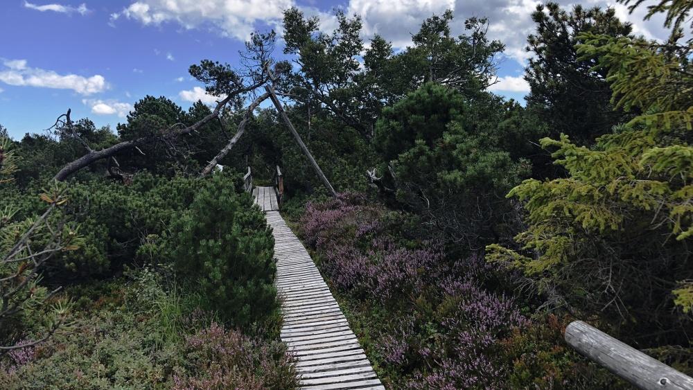 Mých 8+1 nejoblíbenějších výletů v Krušných horách