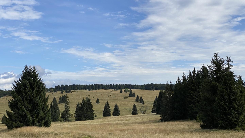 Přebuzské vřesoviště | Krušnohorci