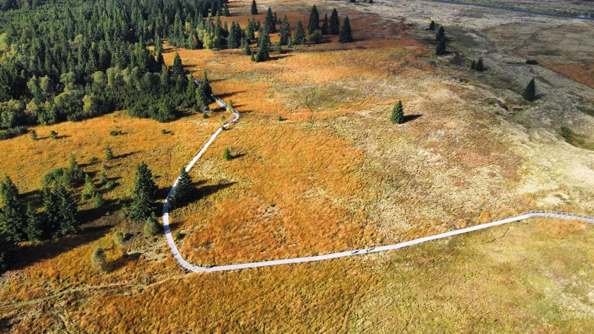 Rašeliniště se na podzim předvádějí v těch nejlepších barvách
