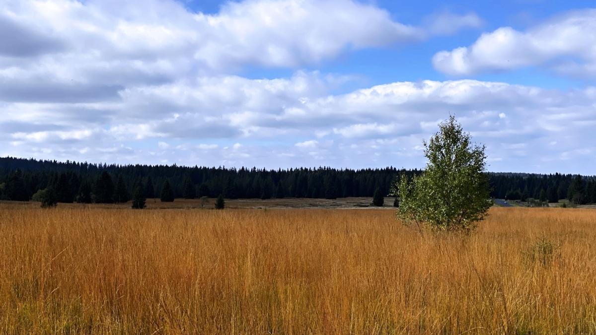 Až neuvěřitelná oranžová trav na rašeliništích   Krušnohorci