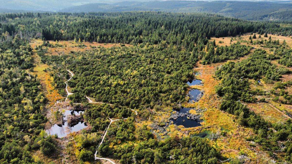 Georgenfeldské rašeliniště na podzim   Krušnohorci