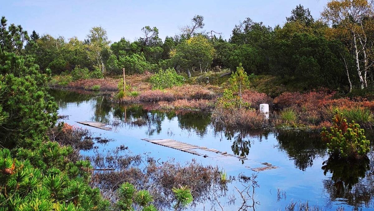 Rašeliniště se na podzim předvádějí v těch nejlepších barvách   Krušnohorci